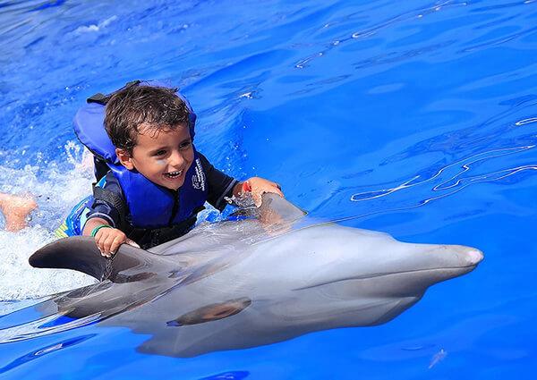 foto de Nado Con Delfines